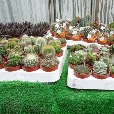 New Cactus and Succulent Range in stock